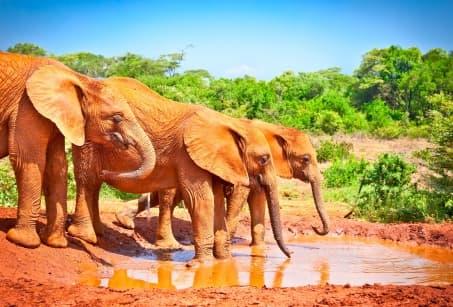 Du Cap au Kruger, echappée en Afrique du Sud