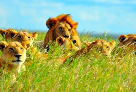 Kenya et Tanzanie, Terres des grands fauves