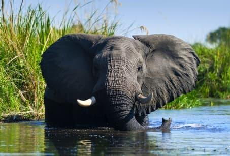 L'essentiel du Botswana, faune & paysages