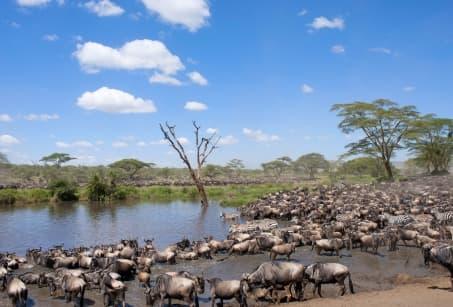Tanzanie: Grande Migration et ile aux épices