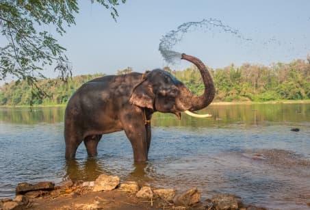 Dessine-moi un éléphant au Kerala