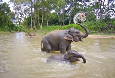 Le Cambodge à l'infini