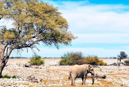 Déserts de Namibie et Chute Victoria