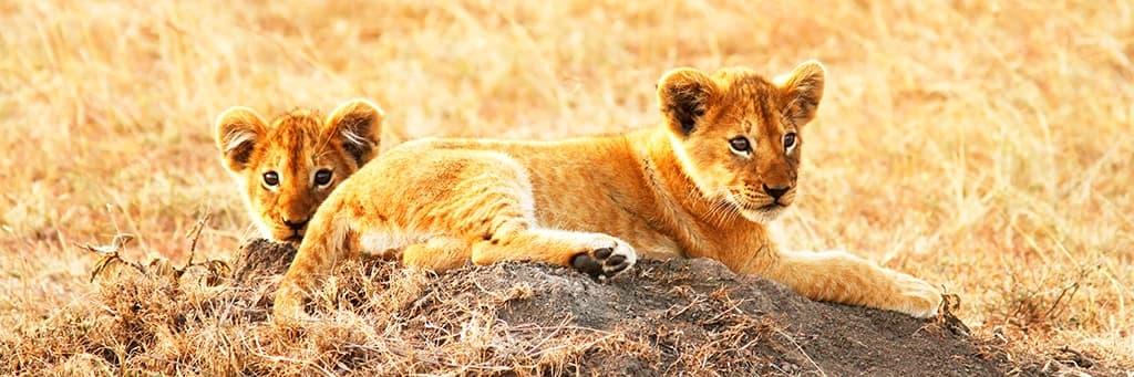 Voyage Taita Hills Wildlife Sanctuary