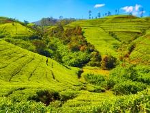 Voyage sur-mesure srilanka
