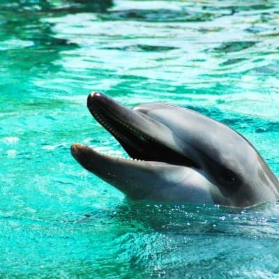 Nagez avec les dauphins ! (Adelaïde)