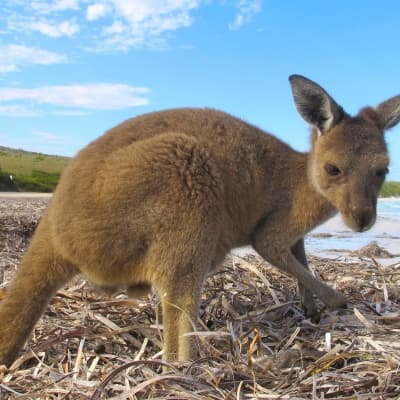 3 jours d'exploration sur Kangaroo Island