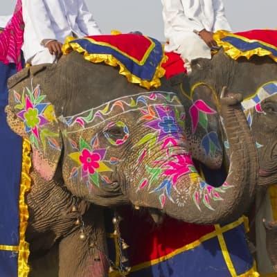 Balade à dos d'éléphant (à Dera Amer, à 30 min de Jaipur)