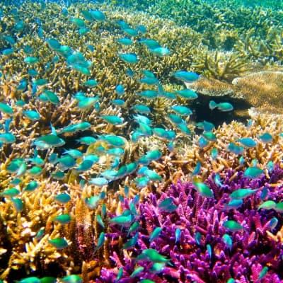 Snorkeling au milieu des poissons multicolores