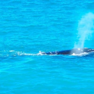Observation des baleines du pacifique