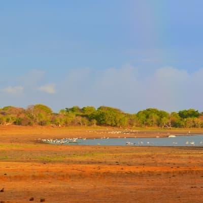 Visite de la réserve de Yala en 4 x 4