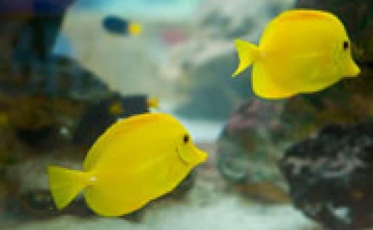 Visite de l'Aquarium de Bangkok