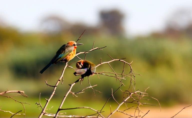 Deux activités par jour proposées par le Lodge (Lower Zambezi Park et Luangwa park)