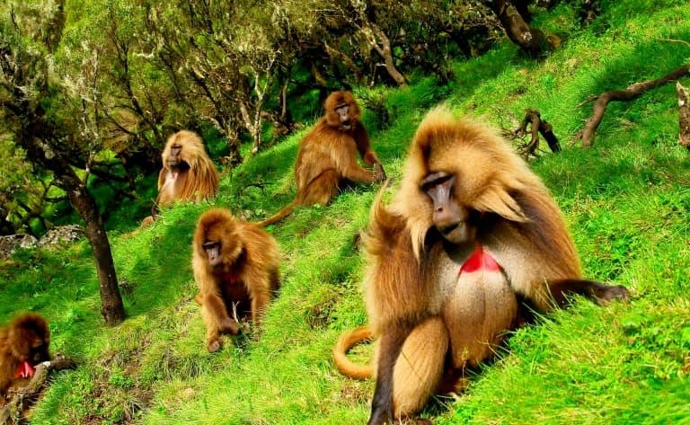 Les paysages à couper le souffle du parc national du Simien