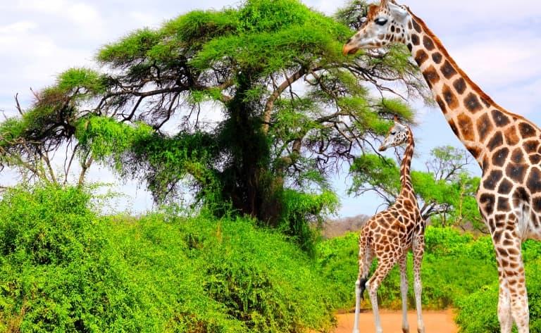 La plus grande réserve animale du pays