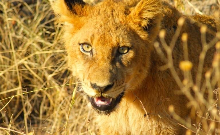 Route pour le Parc Kruger.