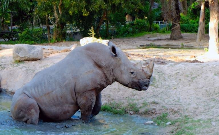 Safaris et paysages au Hluhluwe