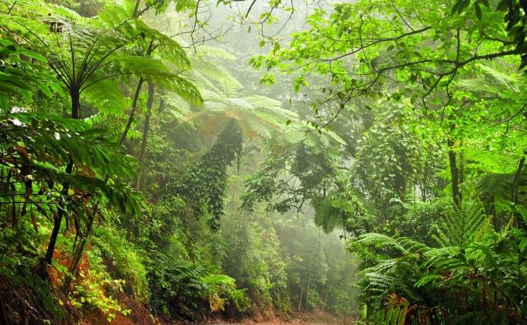 A la découverte des forêts luxuriantes et des plages paradisiaques