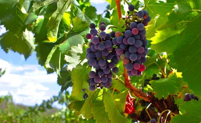Domaines viticoles chiliens