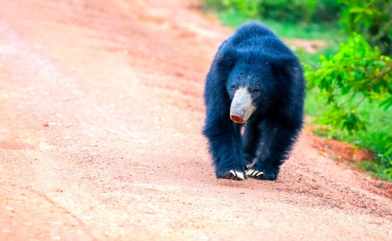 Centre de réhabilitation des espèces en danger de Jirisan