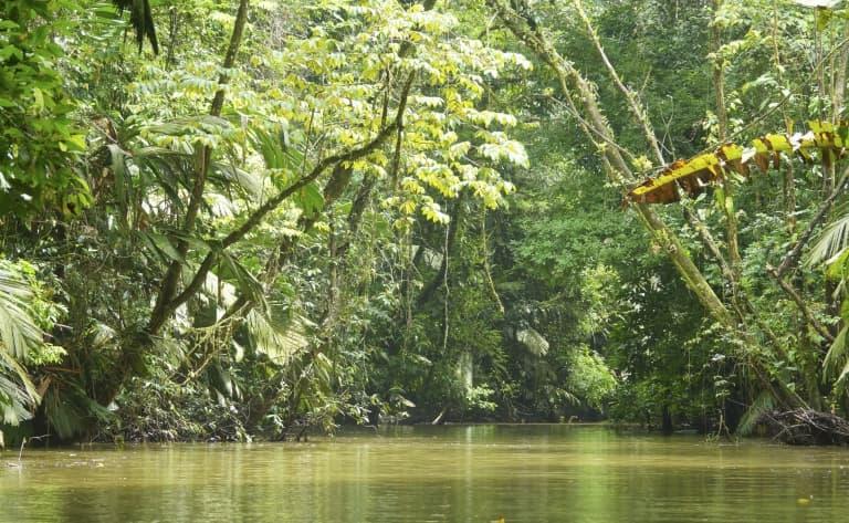 Safari en pleine nature sur les canaux de Tortuguero