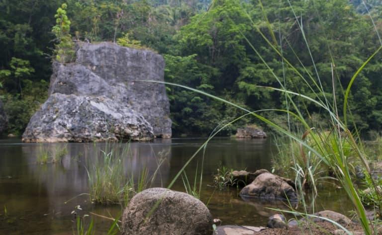 Jungle, rivières et cascades !