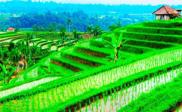 Rizières à Tegalalang, temple de Kehen et Goa Lawah