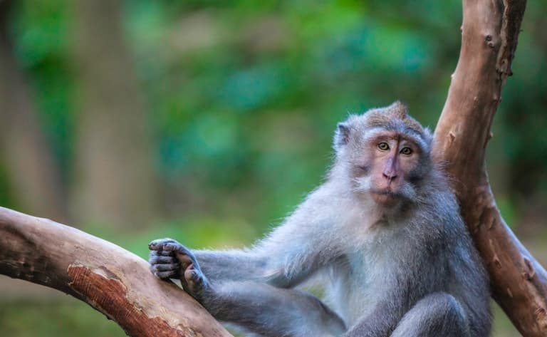 La Monkey Forest, escapade à vélo, massage et spectacle de danses balinaises