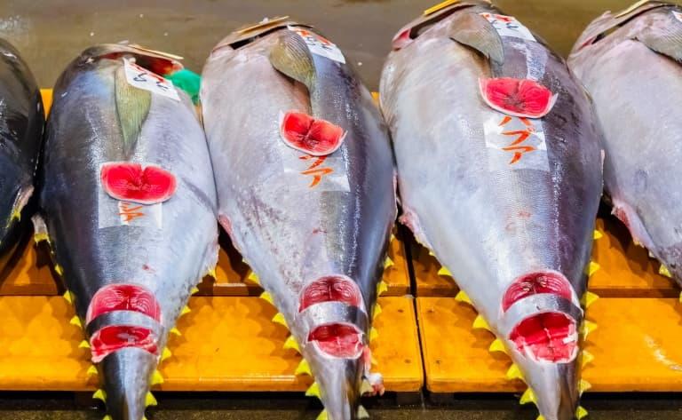 Cours de sushis et promenade dans le marché aux poissons de Tsukiji