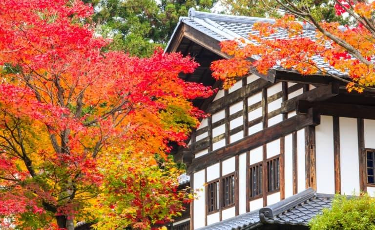 Visite guidée des villes : Tokyo, Kyoto, Takayama, Shirakawa-go, Kanazawa...
