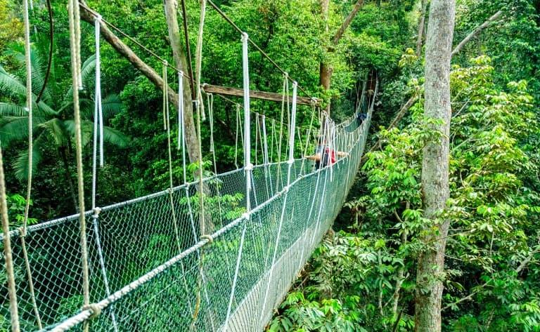 Pont suspendu de Taman Negara