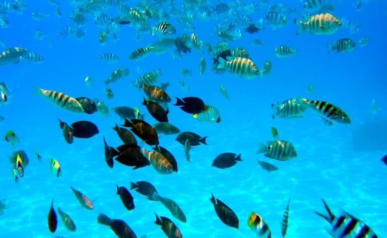 Baptême de plongée sous-marine dans le lagon Moorea