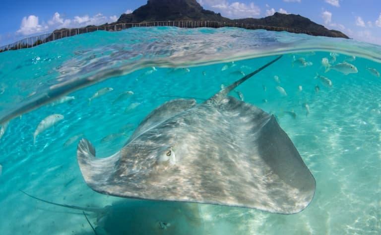 Lagon sublime de Bora Bora