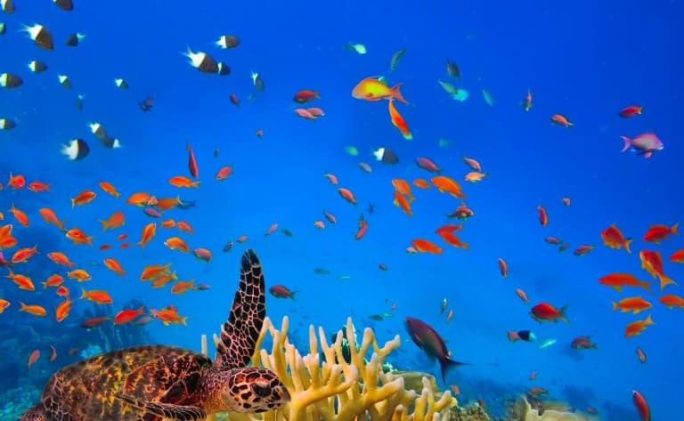 Trésors de l'océan et beauté villageoise
