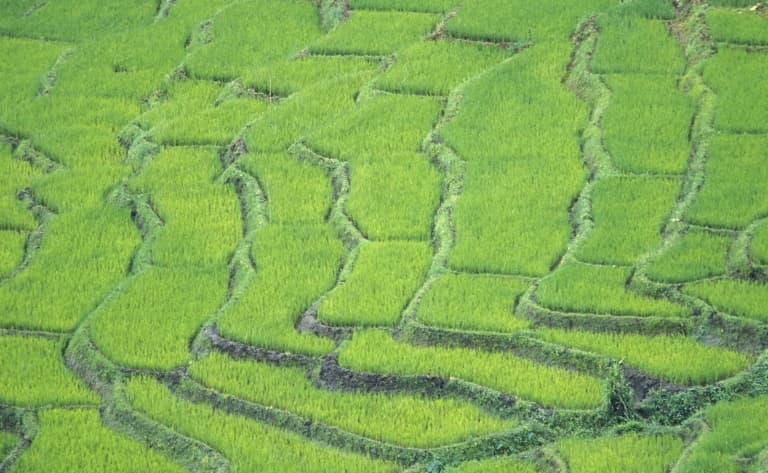 Visite d'une rizière