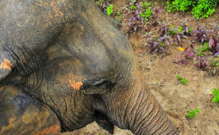 Une journée avec les éléphants de Mondulkiri