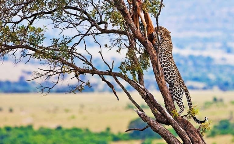 Cap sur Masai Mara !