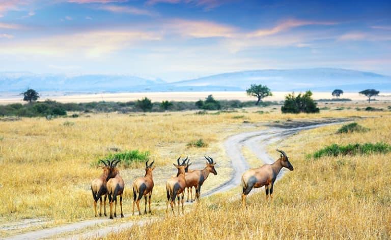 Le légendaire Masai Mara