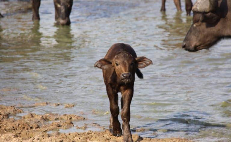 Immersion animalière : le parc Kruger !