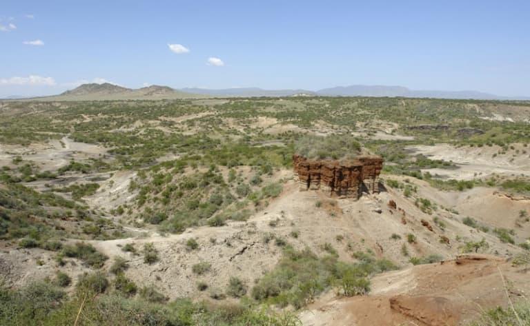 La piste des animaux : cap sur Serengeti !