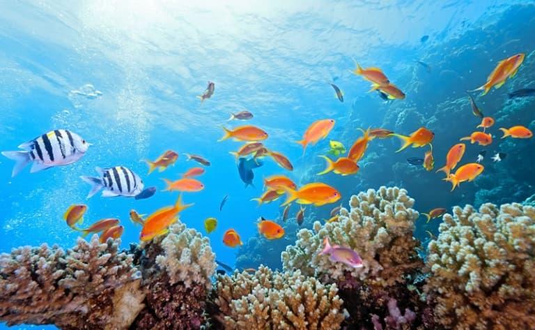 Sur les flots bleus du Pacifique, journée à bord du Paul Gauguin