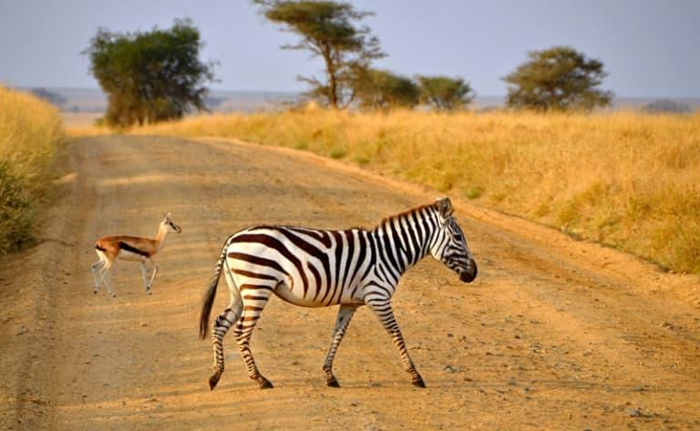 Mythique Serengeti