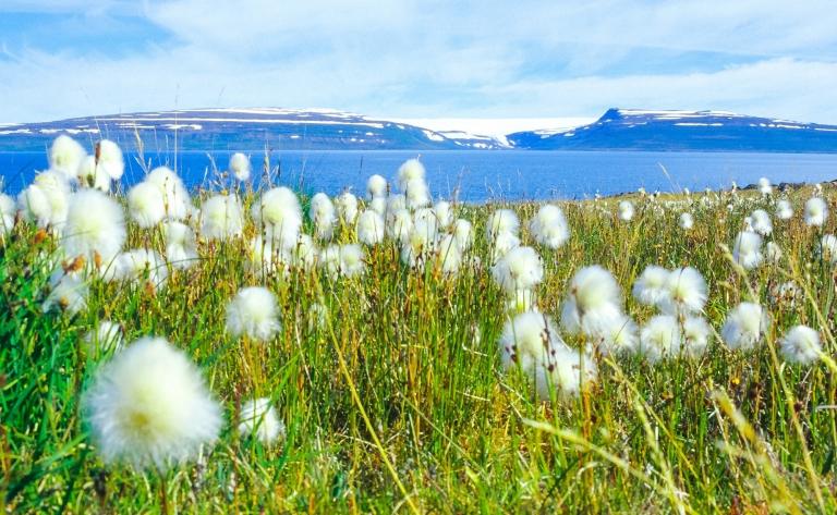 Naviguez à travers les fjords de l'Ouest